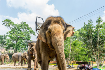 Elephants Vietnam