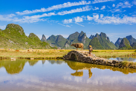 Chinese farmer with water buffalo on stone bridge in picturesque valley surrounded by karst limestone hills in Huixian, China.