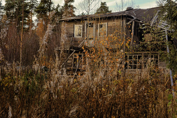 abandoned wooden house visible behind the weed