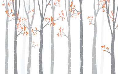 Tree Birch Background
