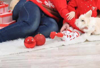 close up. family with a pet rabbit sitting in the living room at