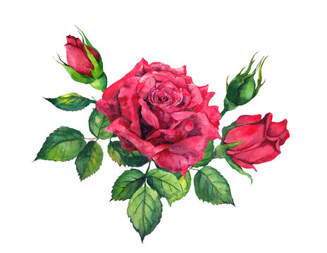 Red roses bouquet. Isolated watercolor floral illustration