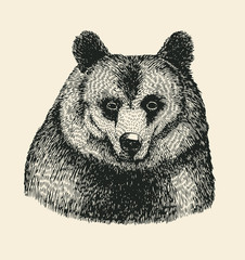 bear head. hand drawn design element. engraving style. vector illustration