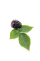 Ripe blackberry fruit with leaf isolated on white background.