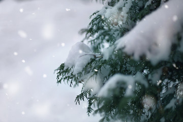Winter wonderland abstract background