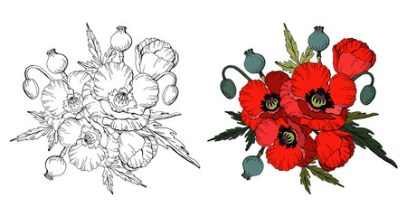 Set of Red poppies isolated on white background and black and white copy for coloring book, vector