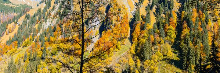 Germany, Bavaria, Allgaeu, Oytal, autumnal forest in the Allgaeu Alps