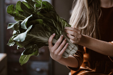 Hands of woman holding chard