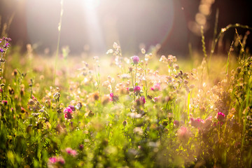 Summer meadow at evening twilight