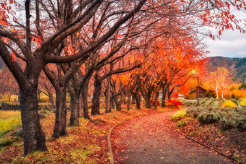 Fallen Leaves on the Autumn Path in Japan