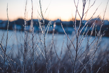 Wall Mural - Frozen beautiful plants covered with icicles. Winter background. Selective focus. Shallow depth of field