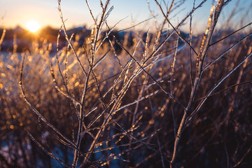 Wall Mural - Frozen beautiful plants covered with icicles in sunlight. Winter background. Selective focus. Shallow depth of field