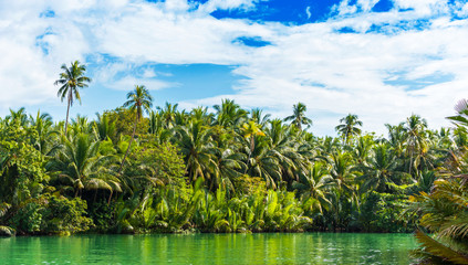 View of jungle green river Loboc at Bohol island of Philippines. Copy space for text.