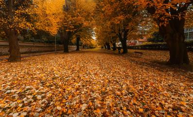 Zugazarte park in autumn with leaf on the ground