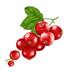 Hand drawn watercolor illustration of the food: ripe tasty red currant branch, isolated on the white background