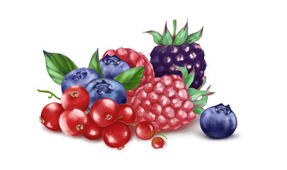 Hand drawn watercolor illustration of the food: ripe tasty red currant, blueberry, blackberries and raspberry isolated on the white background - Illustration