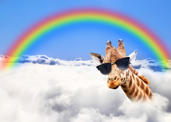 Foto auf Gartenposter Giraffe Happy giraffe under the rainbow