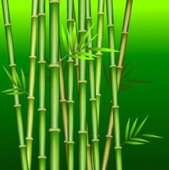Bamboo stem