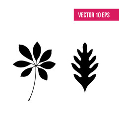 Leaves vector set. Leaves isolated from the background. Collection black silhouettes of leaves. Leaves sign.  herbarium