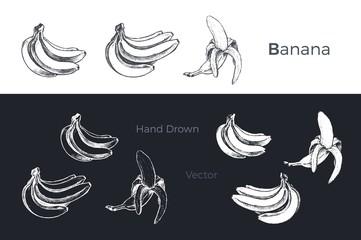 Hand drawn bananas. Fruits sketch vector set