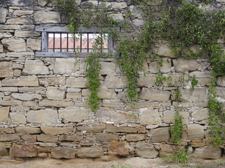 Vines on Old Stone Wall