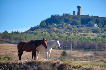 Horses by the medieval tower in Radicofani