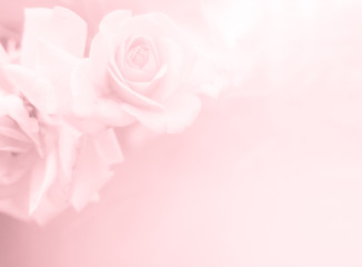 Festive flower on pink  background. Overhead top view, flat lay. Copy space. Birthday, Mother's, Valentines, Women's, Wedding Day concept. - An image