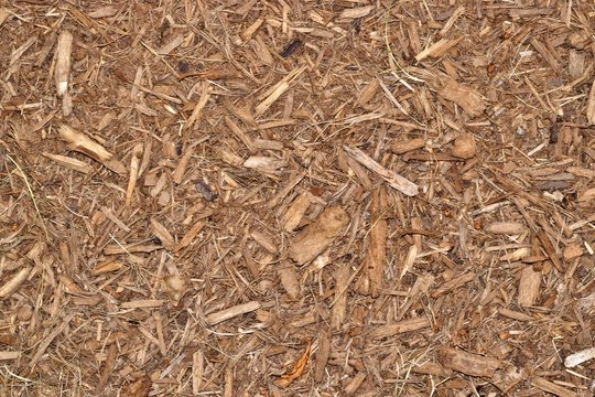 Wood chip mulch scattered thickly in a landscaped garden area.