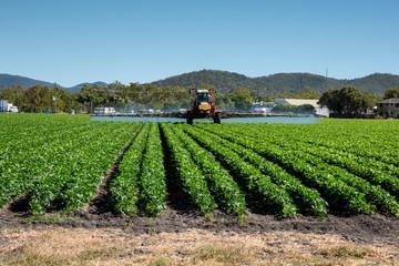 Crop spraying, Bowen