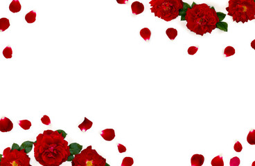 Beautiful frame of flowers red roses and petals on a white background with space for text. Top...