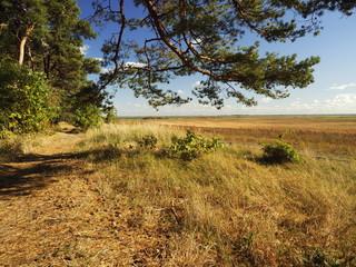 Am Saaler Bodden bei Wustrow, Halbinsel Fischland, Mecklenburg-Vorpommern, Deutschland