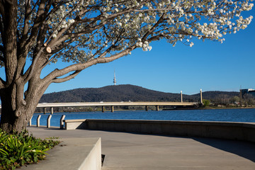 A view of the banks of Lake Burley Griffin, Canberra.