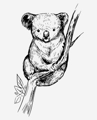 Koala bear on a tree. Hand drawn sketch converted to vector