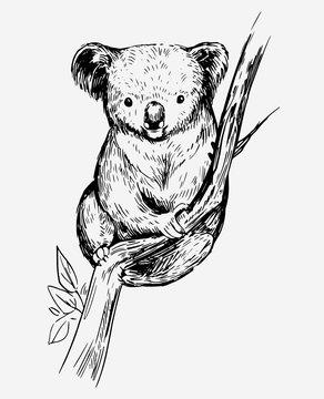 Koala bear on a tree. Hand drawn sketch converted to vector