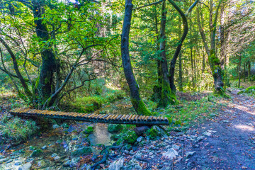 A little wooden bridge above a water stream of Mylaion river into the dense forest near the area of  Menalon trail Elati- Vitina in Peloponnese, Greece