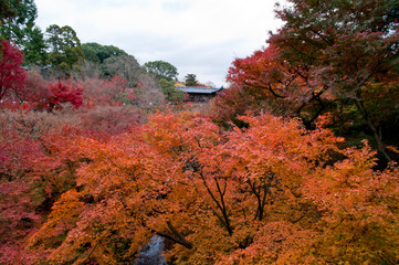 Scenery of Japanese autumn leaves.