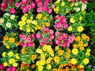 ..Top view of colorful many flower blooming in springtime background..
