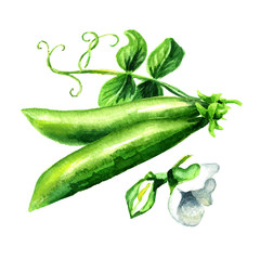 Green fresh peas with leaf and flower, Watercolor hand drawn illustration  isolated on white background