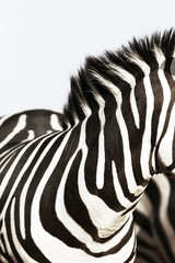 Part of Zebra, abstract black and white stripes, vertical, copy space