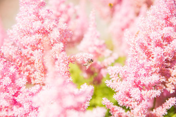 Pink beautiful flowers background