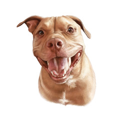 Pit Bull Terrier isolated on white background. Portrait of a cute dog with a friendly smile. Animal collection: Dogs. Hand Painted Illustration of Pets. Design template for banner, cover, card, pillow
