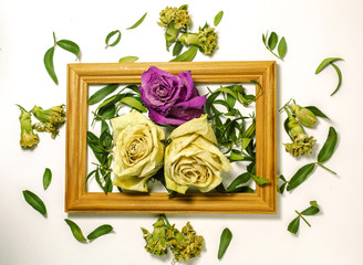 three dry roses with leaves, two white roses, one pink rose, inside a wooden frame on a white background with leaves and carnations outside close up