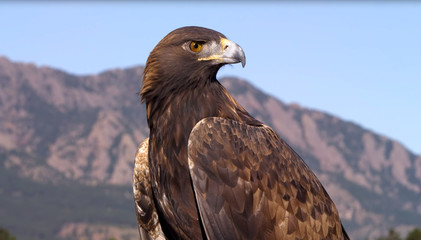 The beautiful colored falcon in the mountains