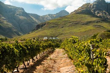 Weinbaugebiet bei Stellenbosch in Südafrika Wall mural