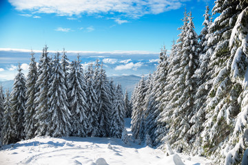 Winter forest in Carpathians