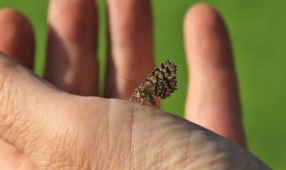 Konzentration auf die Natur und den Schmetterling in der Hand