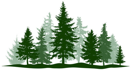 Green forest evergreen pine, tree isolated. Park Christmas tree. Individual, separate objects. Vector illustration Wall mural