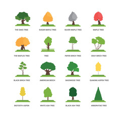 Simple Set of 16 Vector Icon. Contains such Icons as undefined, Black Ash tree, The Oaks Bigtooth Aspen Quaking Basswood Silver Maple tree. Editable Stroke pixel perfect