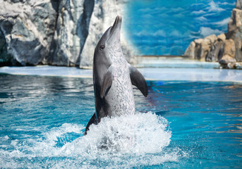 Photo sur Aluminium Dauphins Dolphins playing water.