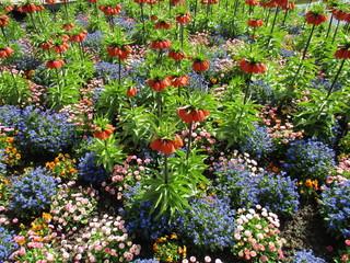 fotos de plantas varias naturaleza